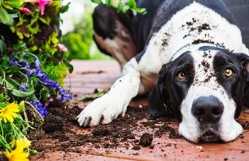 How to Keep Dogs Out of Flower Beds?
