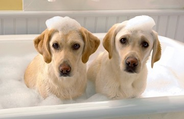 How Often Should The Puppy Take A Shower?