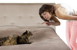 Why Do Cats Pee on The Beds?
